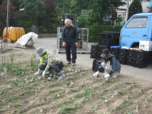 中島様 畑 菜匠(さいしょ)栃木県 小山市 野菜